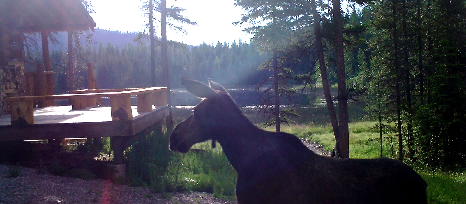Moose at Lost Lake Cabin for Sale